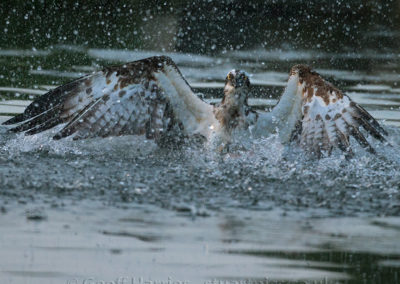 Osprey 28(10) in water 24.05.15
